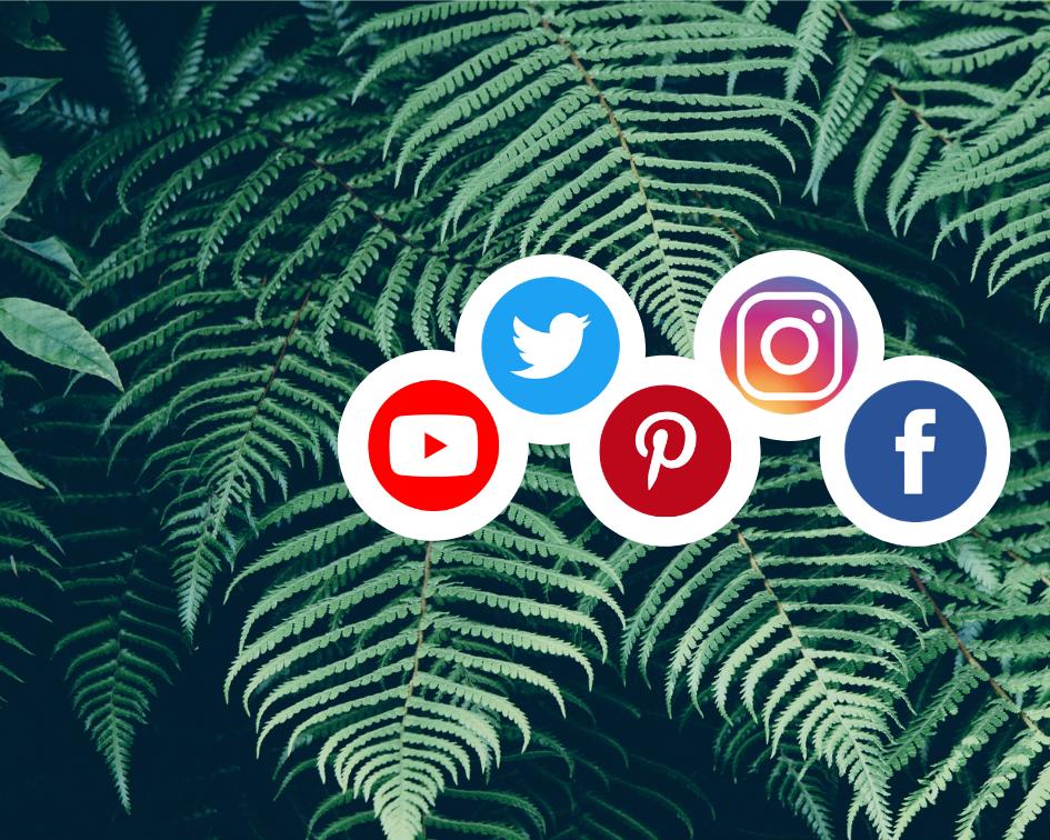 Social Media Tasks - Page / Profile Set upProfile & Banner Art CreationPost Creation & ManagementEngagementCustom Hashtag LibraryBlog Management & Content WritingCampaign Development & ImplementationMailchimp / Newsletter Creation