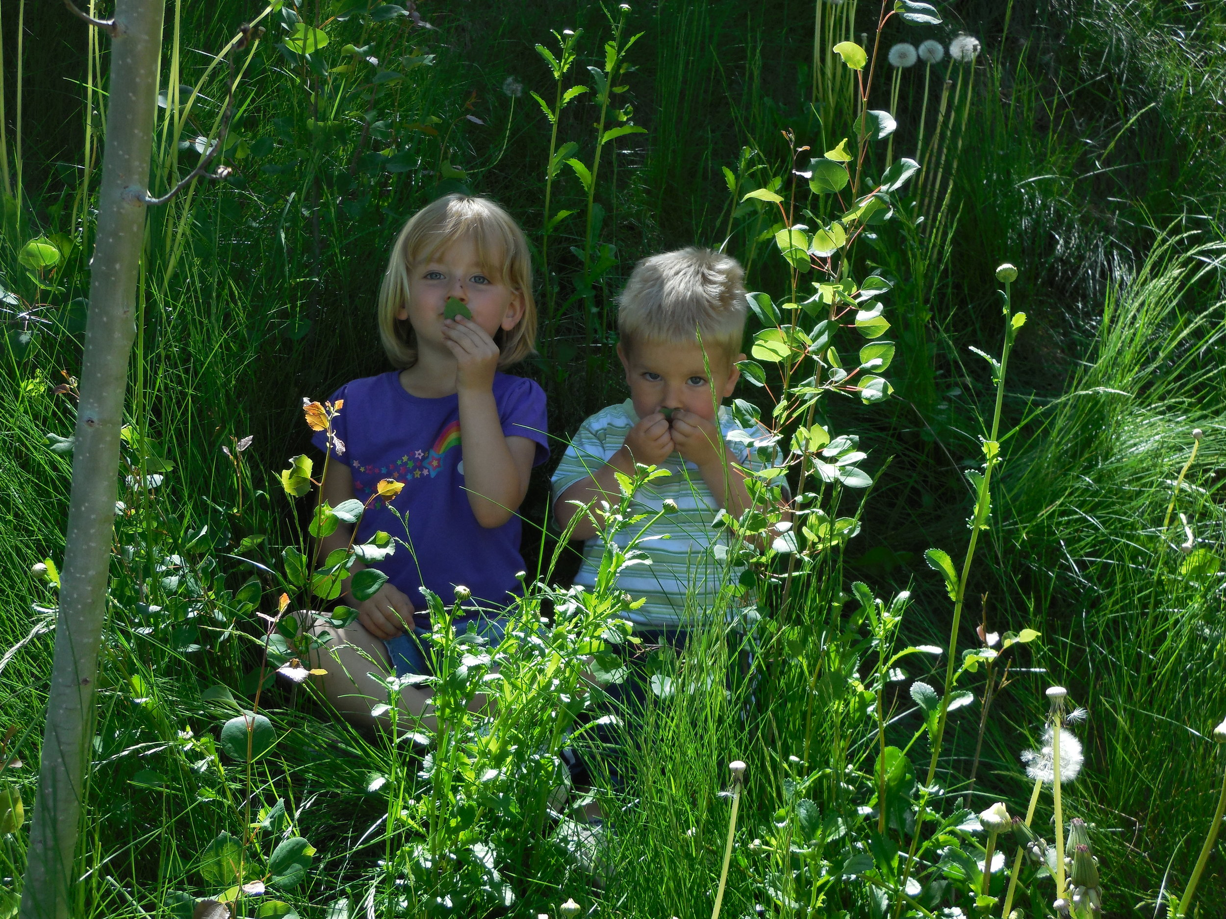 Some tall grass on a shady back slope was the perfect hideaway for these 2 cuties.