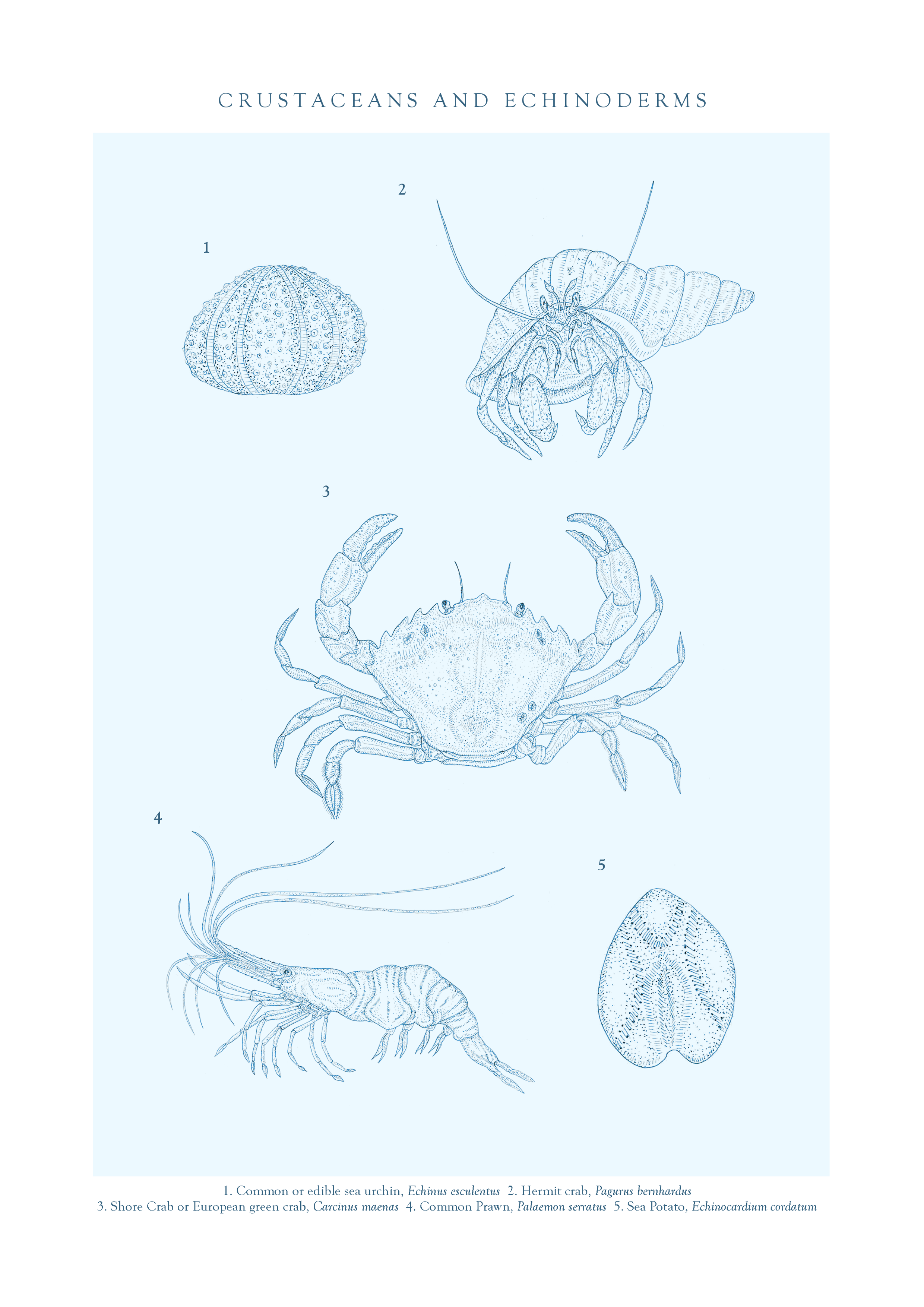 file17. TVOD crustaceans final A4.png