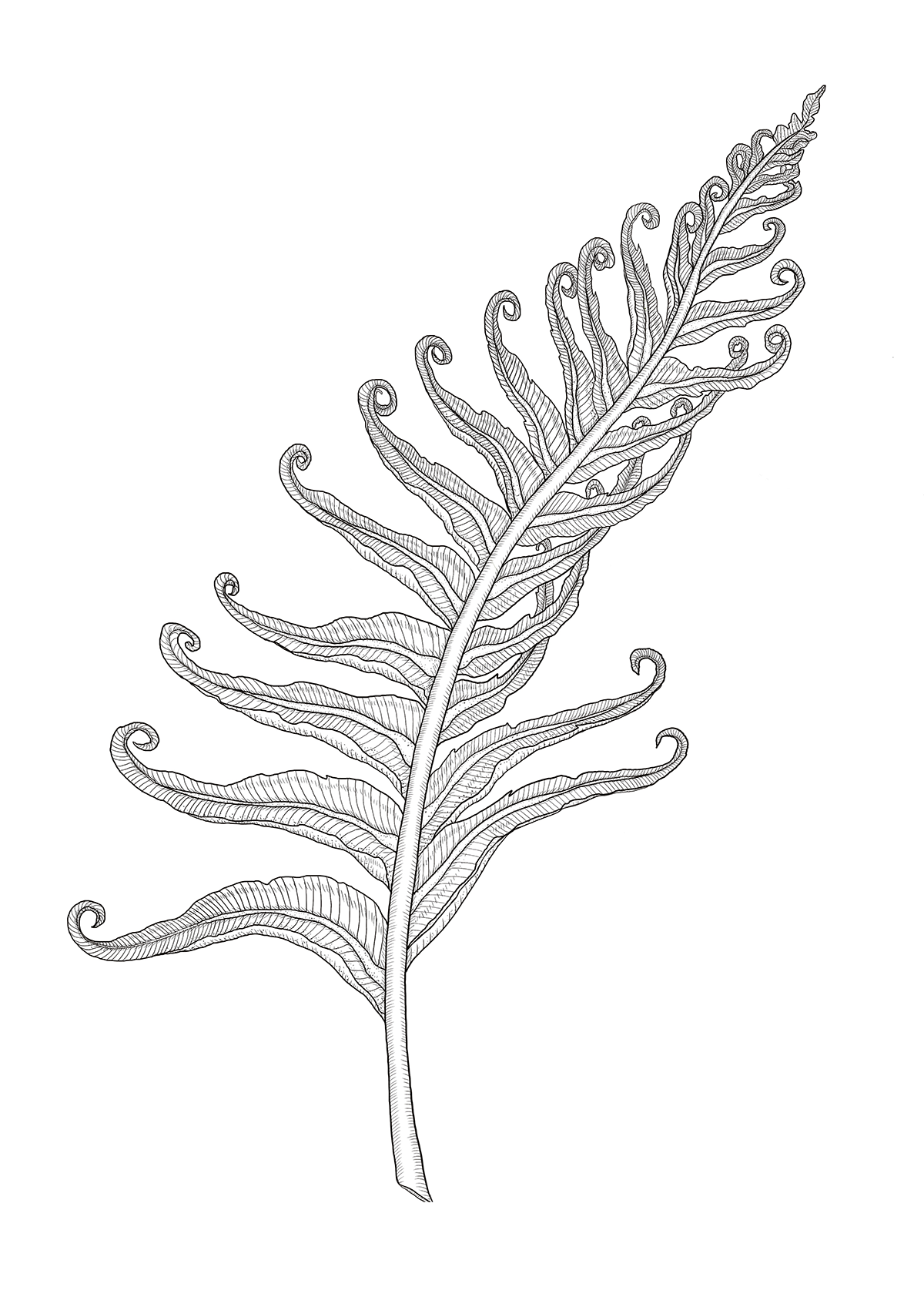 octopus19_fern_01small.png