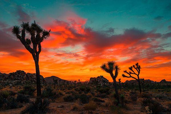 Retraites spirituelles au Joshua Tree - Les 9 Ciels