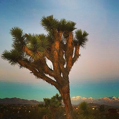 Retraites-Joshua-Tree-Chamanisme-desert.jpg