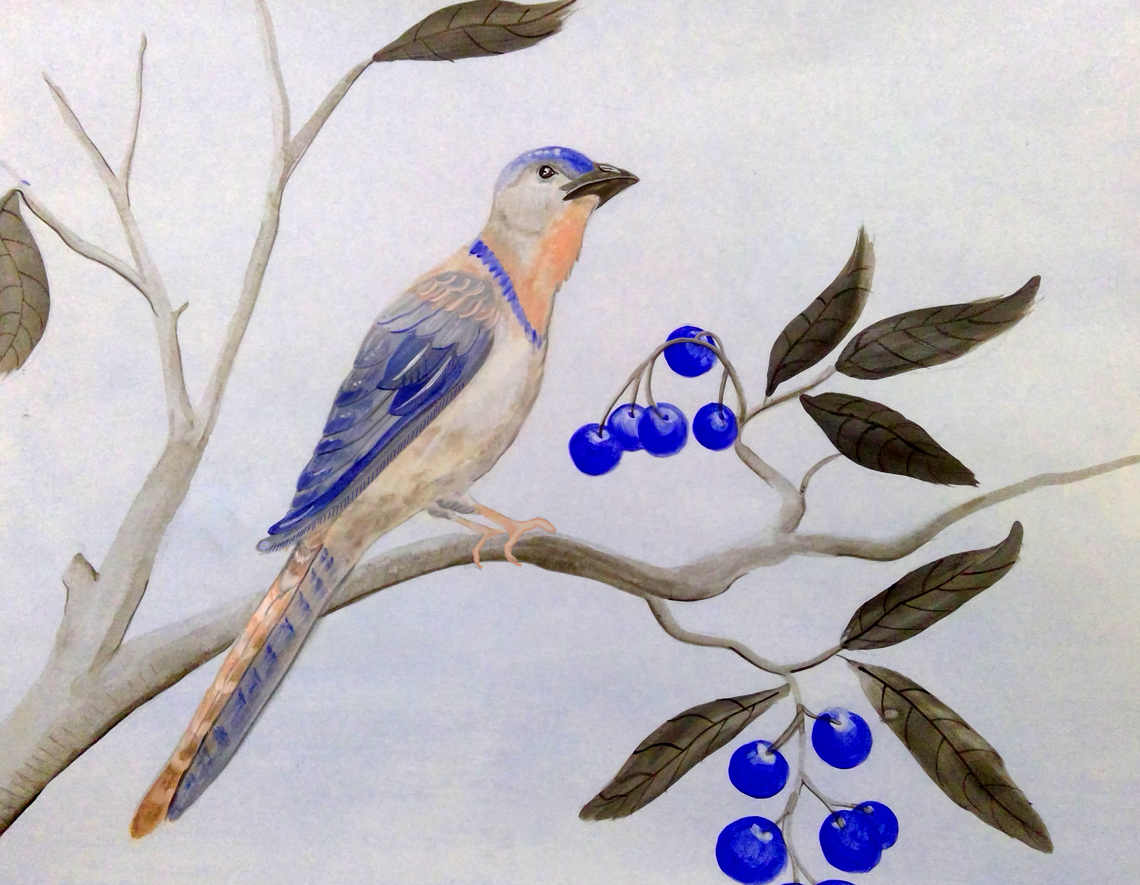 blue and peach bird and berrys.jpg