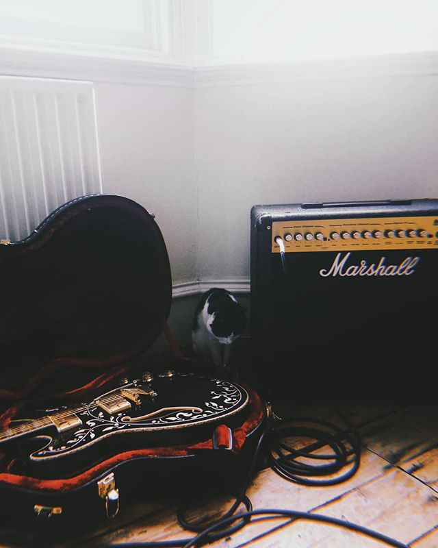 Tiny cat. . . . . .  #cat #catsofinstagram #marshall #ibanez #newmusicsoon