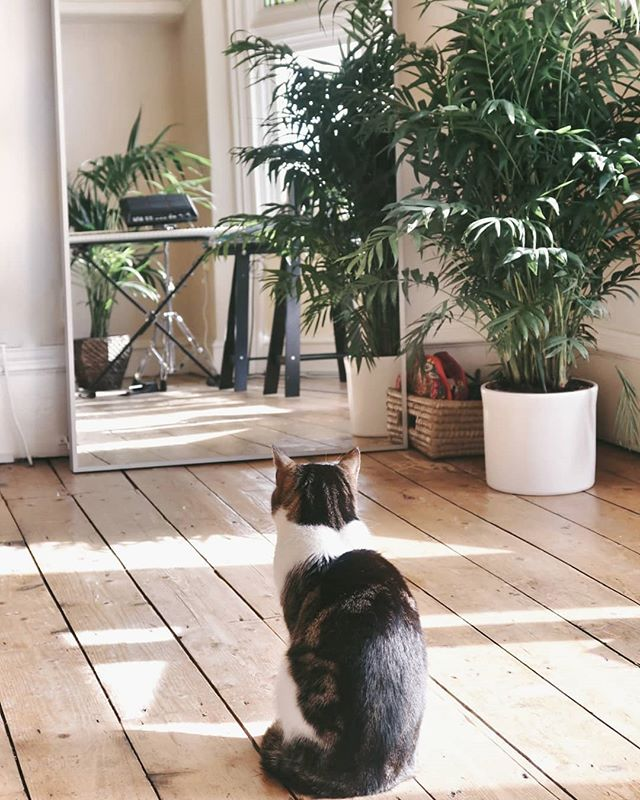 Arwen hasn't quiiiite figured out the mirror. She keeps looking in it and then behind it in an attempt to understand what's going on. She is silly and nice. . . . . #cat #catgram #catsofinstagram #palm #homedecor #minimalism #minimalist #mirror