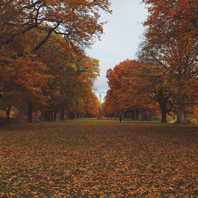 😍🍂 . . . . #autumn #autumntrees #fall #falltrees #gibside #nationaltrust