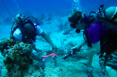 dive mooring turks and caicos reef fund