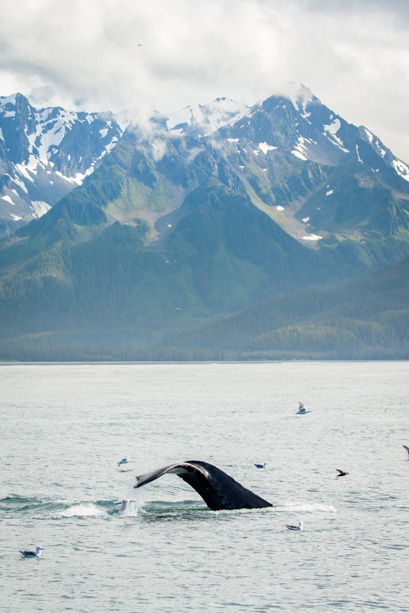 Whale tale in Alaskan ocean