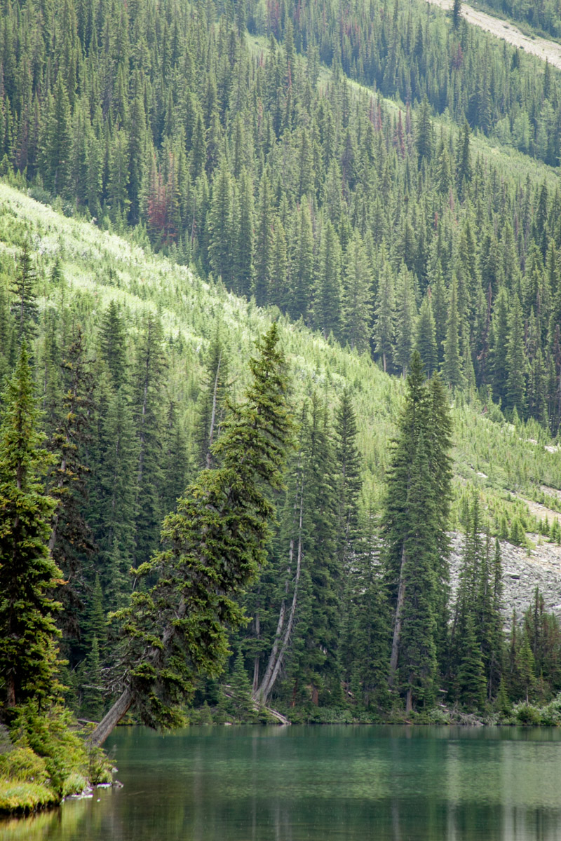 Alaska forest reaching out over the ocean