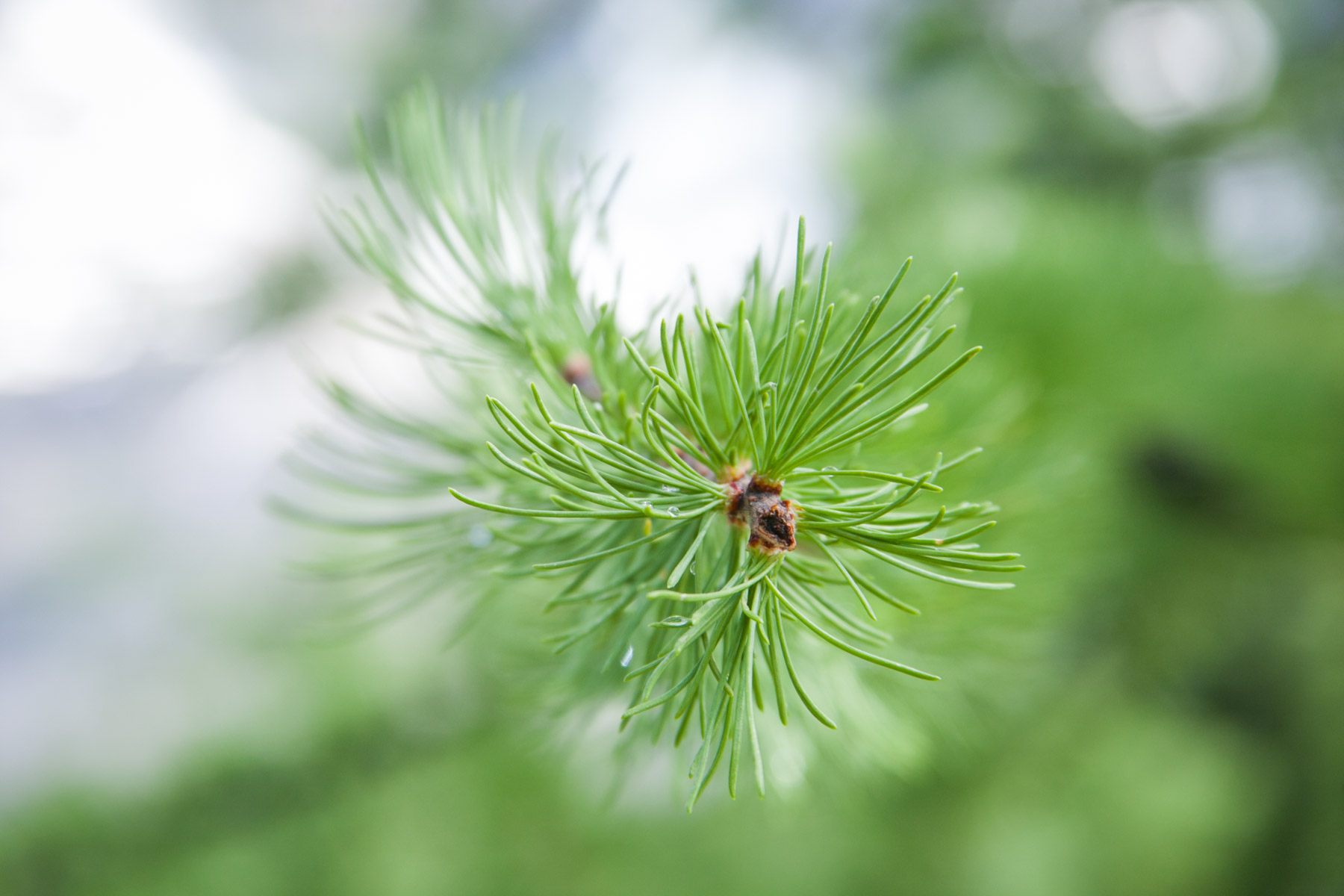 Up close and personal on a pine tree