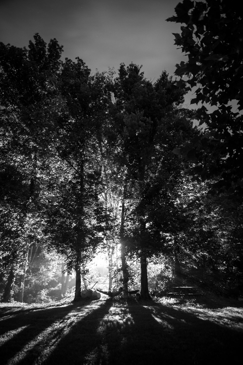 Black and white sun beaming through the forest