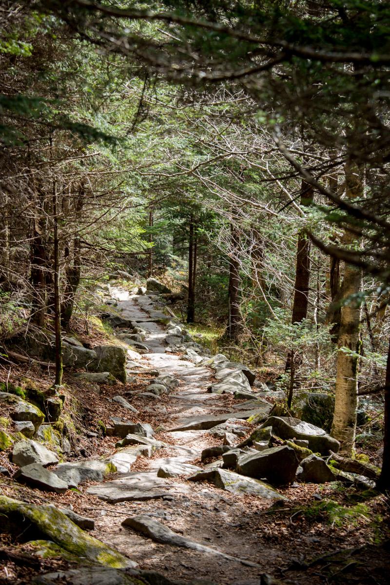 Trails through North Arkansas