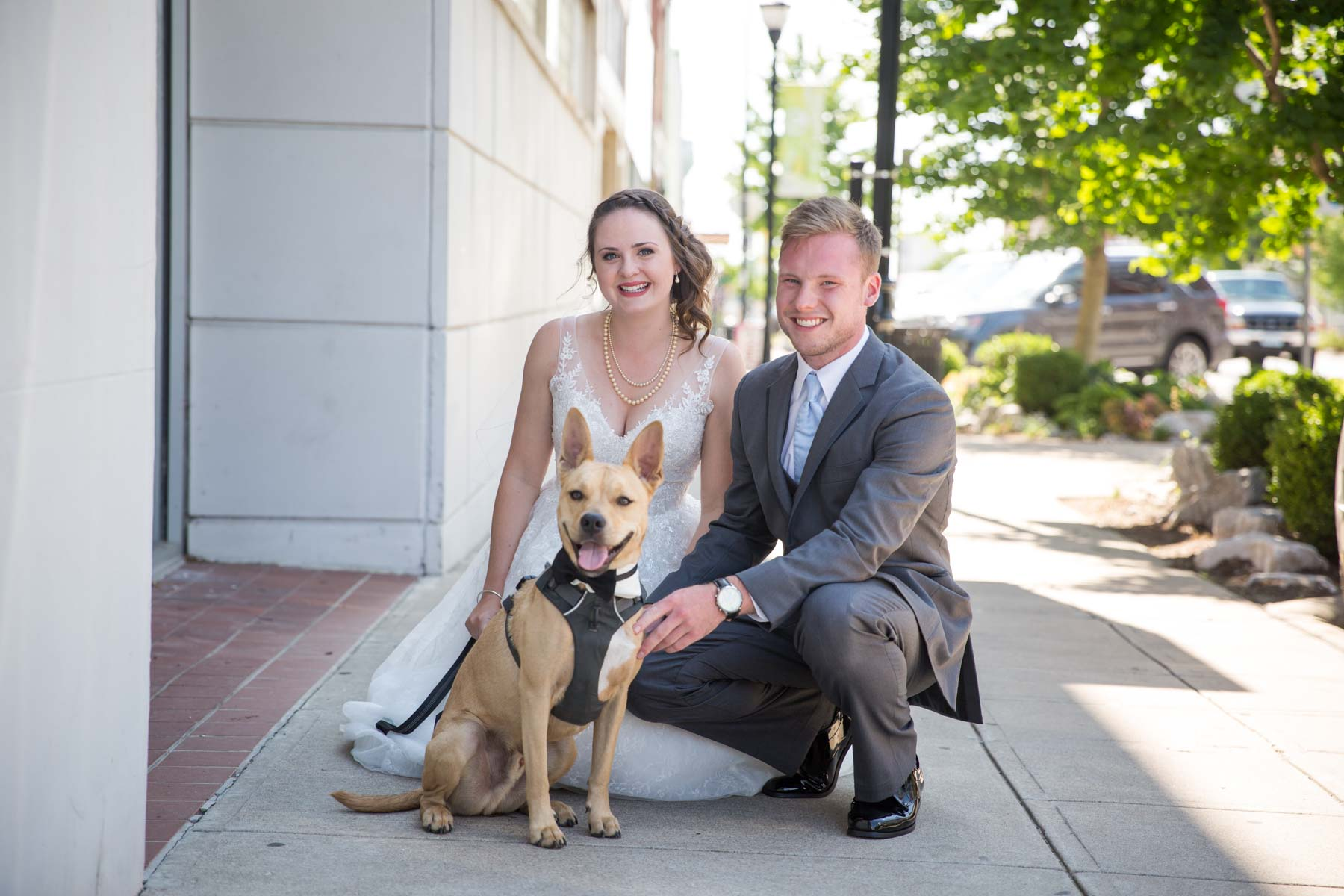 wedding dog-1.jpg