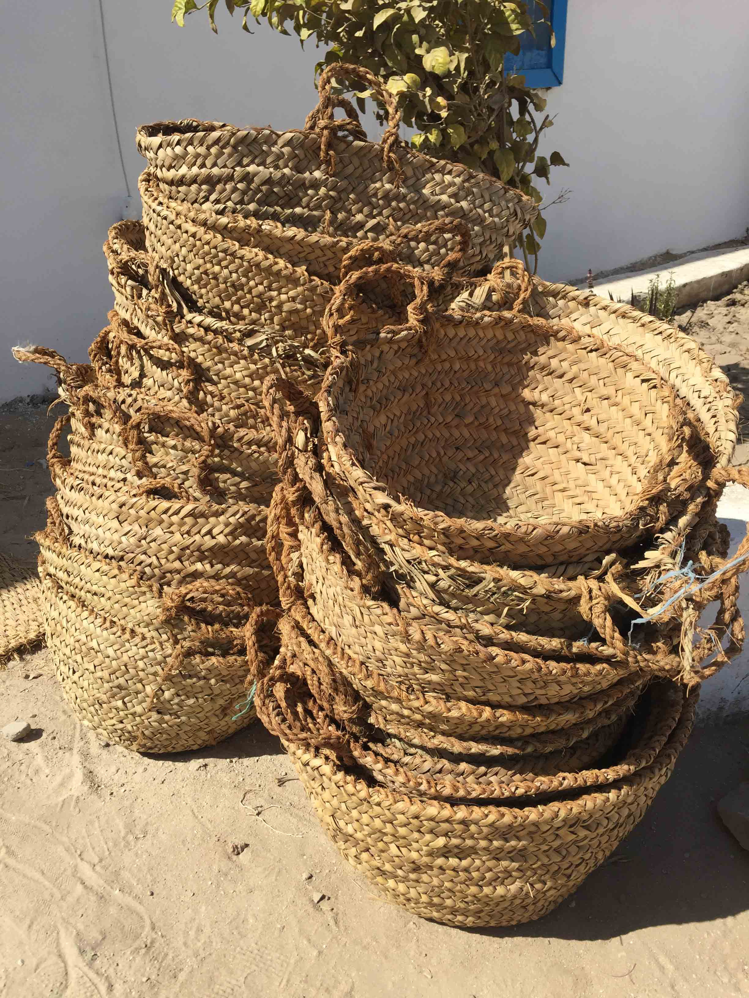 "Fig. 14. Baskets that have seen years of action in the desert sun at Abydos are no longer ""green"" in appearance, but a sun-dried brown that is closer to the color of the basket handles, made from thin strands of plant fiber from the trunk of the palm tree — a bunch of which can be seen between the two finished baskets in the photo at left. Photo: Wendy Doyon / North Abydos Expedition © 2019"