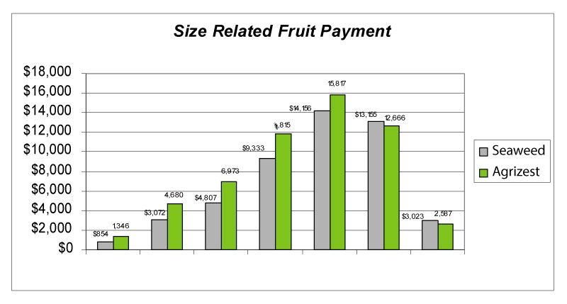 Graph 1. Size Related Fruit Payment