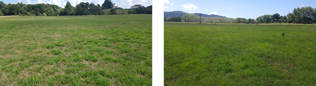 Control (untreated) paddock on the left, Biozest treated paddock on the right.