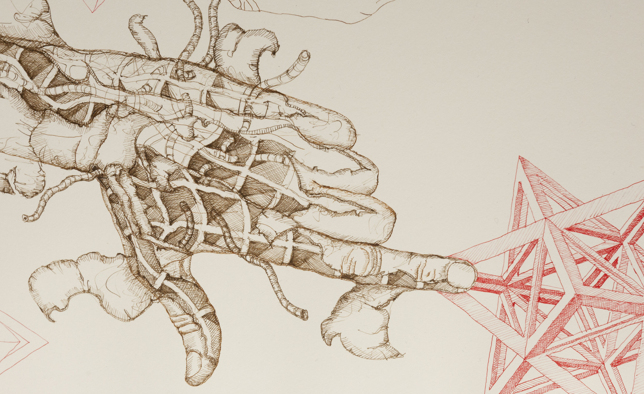mirena-rhee-hand-peeling-pen-ink-drawing.jpg