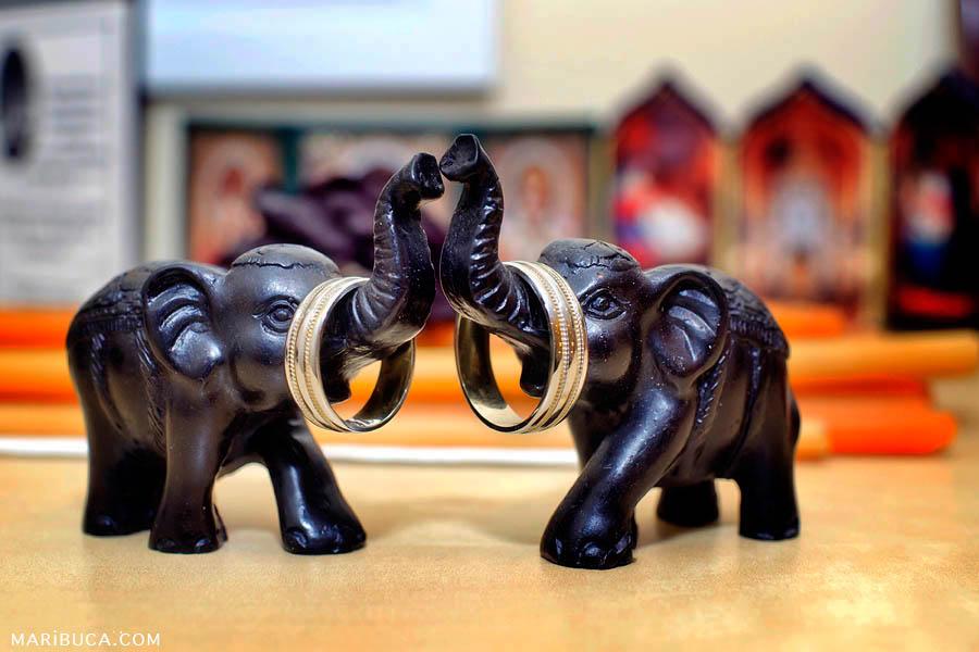 Wedding band: wedding rings hang on elephant's nose