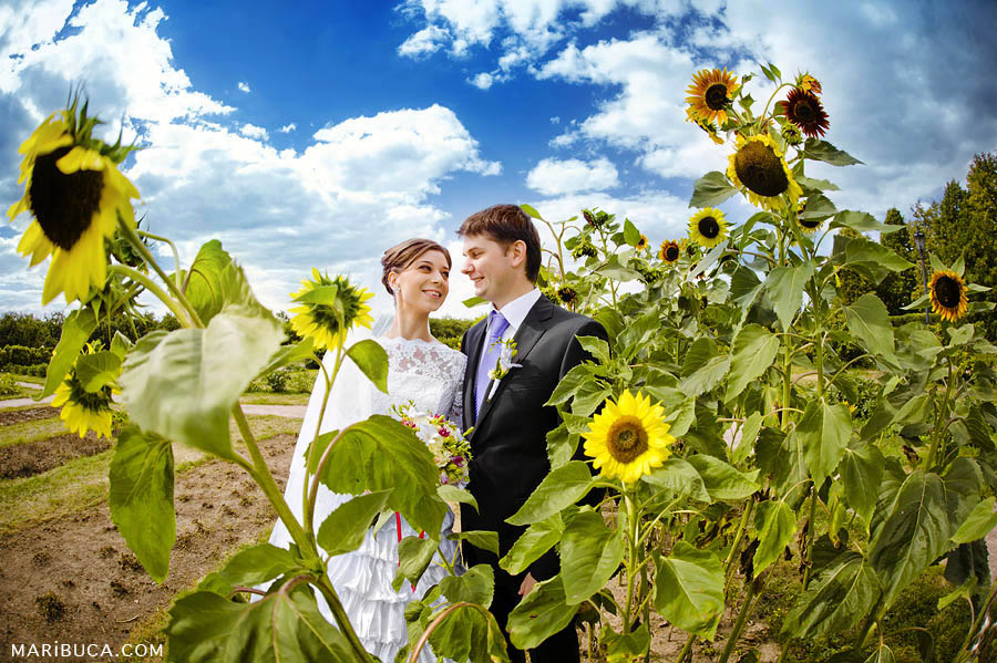 Bride and groom look and smile each other surrounded yellow sunflowers and blue sky.