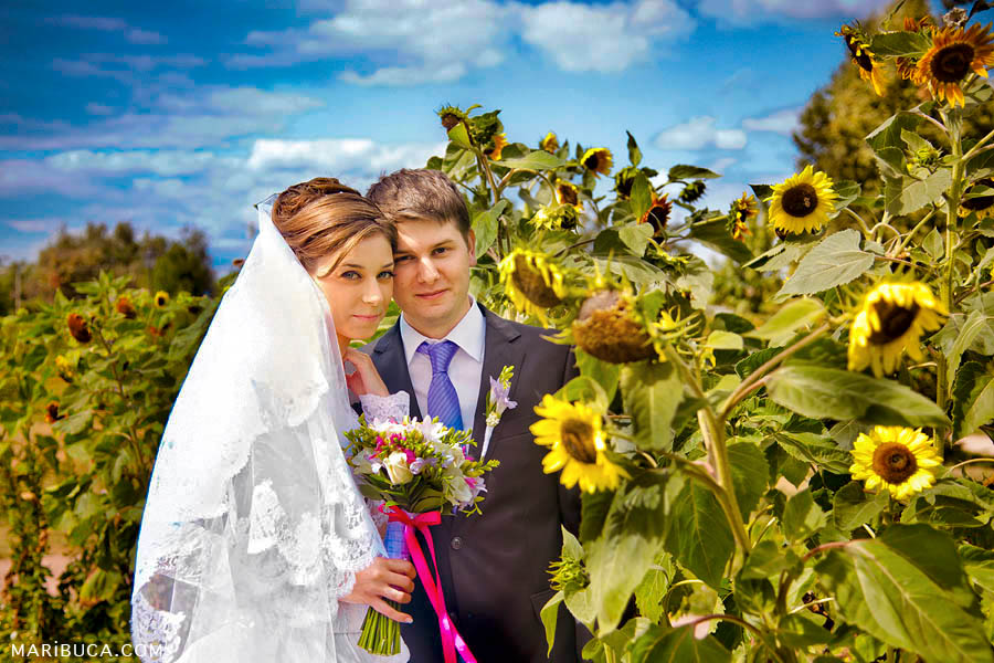 Bride and groom hug each other surrounded yellow sunflowers and blue sky.