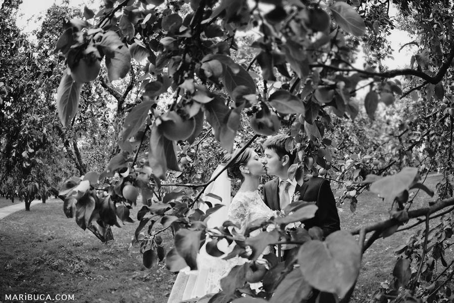 the bride and groom are kissing surrounded by green apples in the apple orchard at sunset.