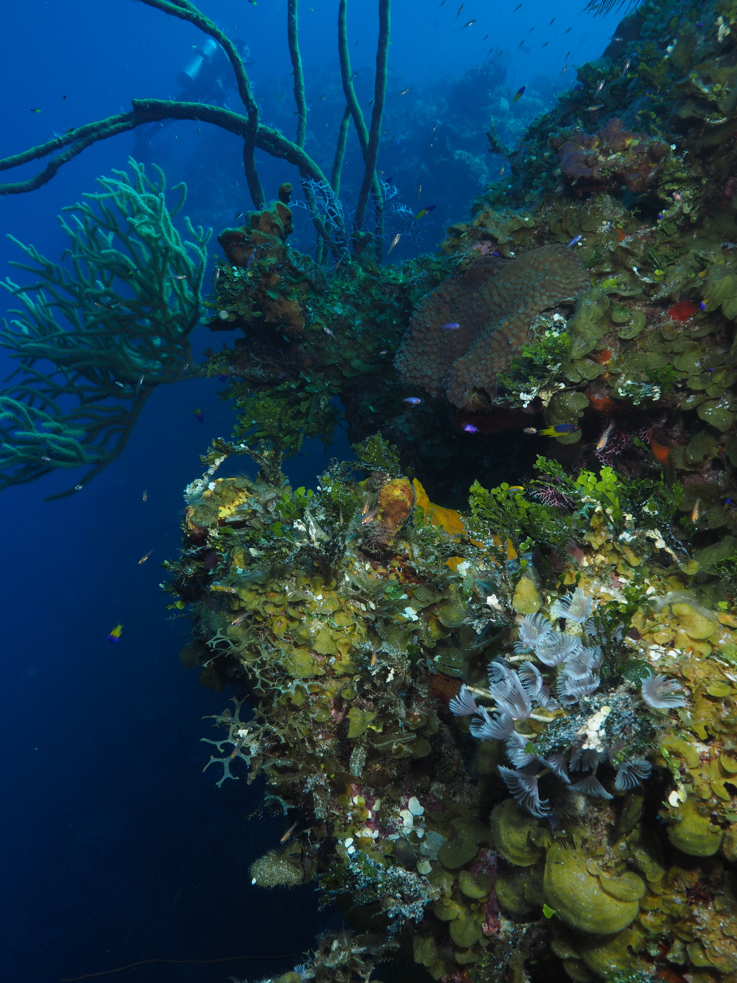 Reef wall, spectacular visibility