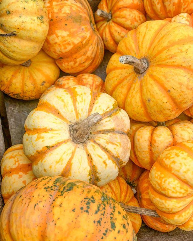 Pumpkin season 🧡 #madeinhygge #October #fall #pumpkin #upstate #fall