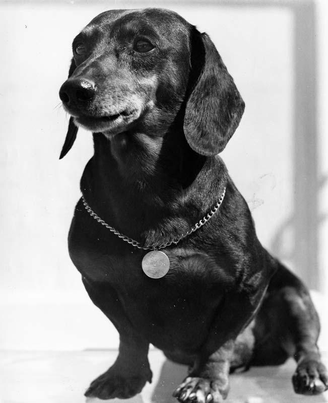 "The Wayne family dachshund ""Blackie."" Photo courtesy of John Wayne Enterprises"