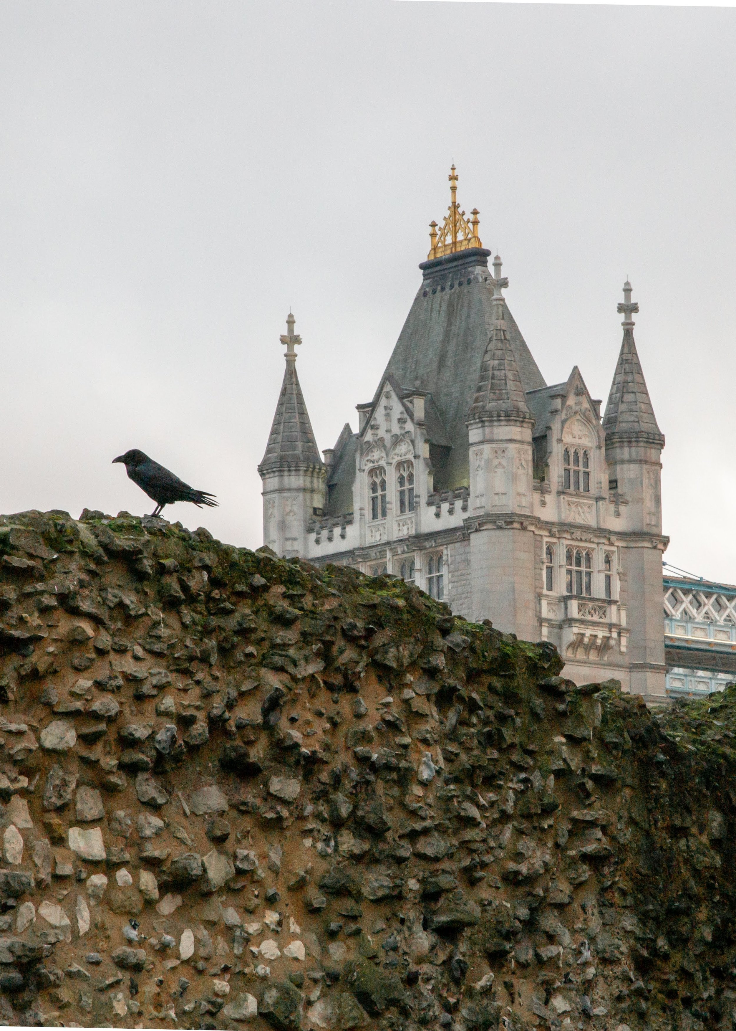 I love ravens, so this picture made the top of my list, taken at the  Fortress of the Tower of London, England,  looking at the Tower Bridge.  @roger.cummings