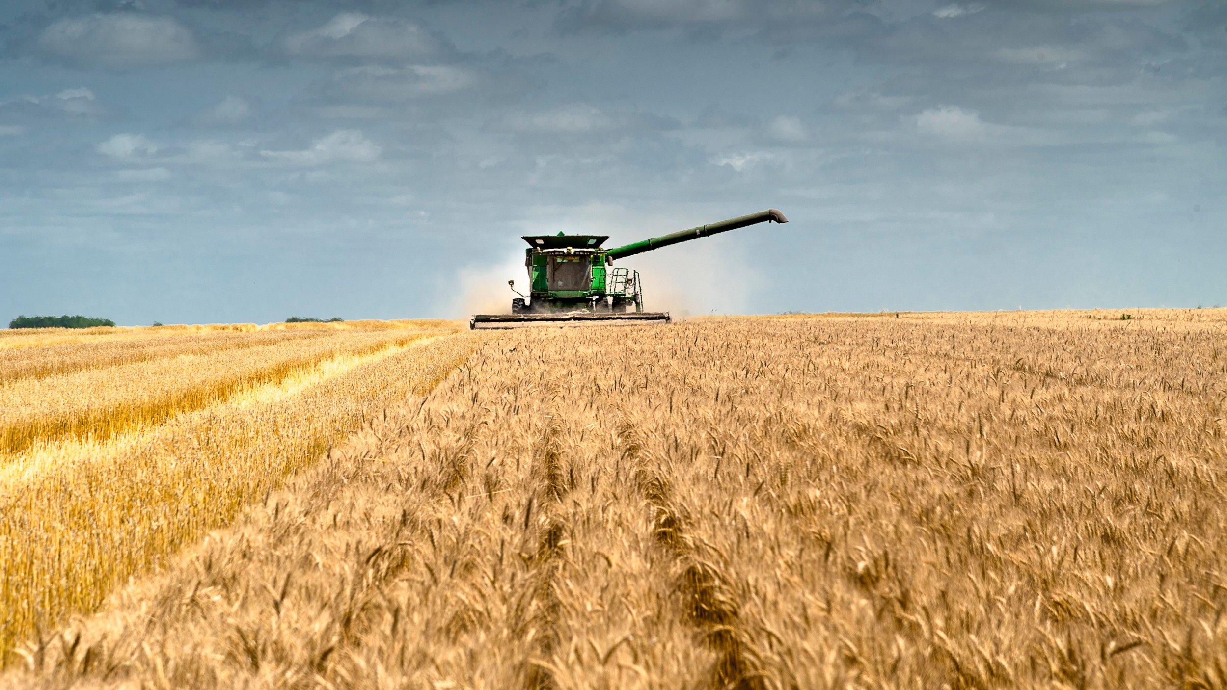 AGRI_WheatHarvest1.jpg