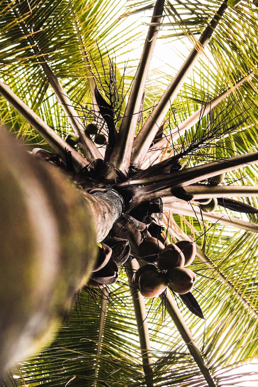palm tree3.jpg