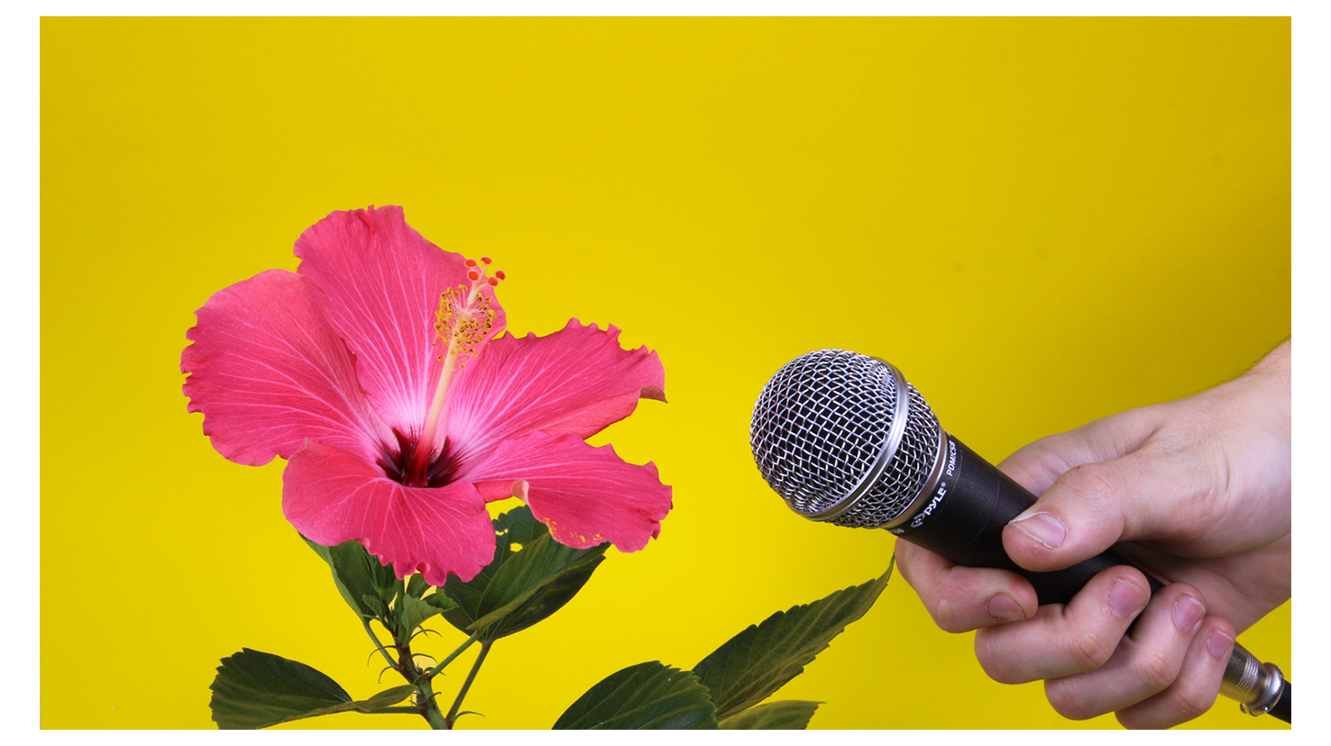richie brown flower microphone.png