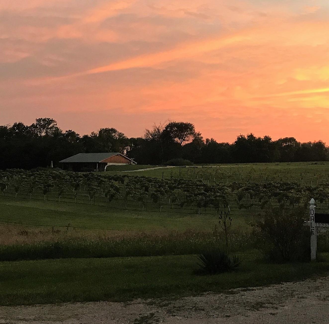 winery+sunset.jpg