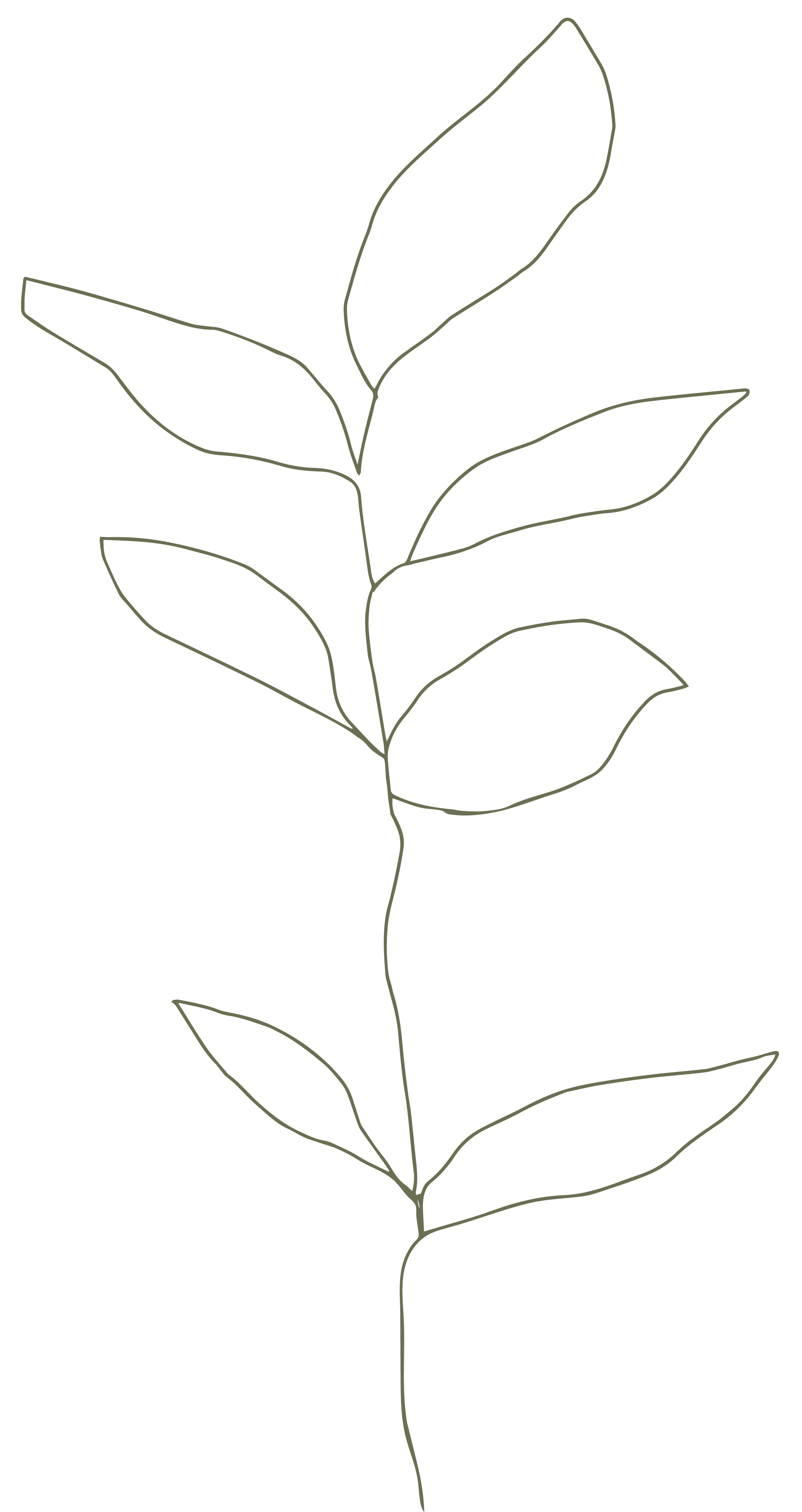 Flower 1080px-02.png