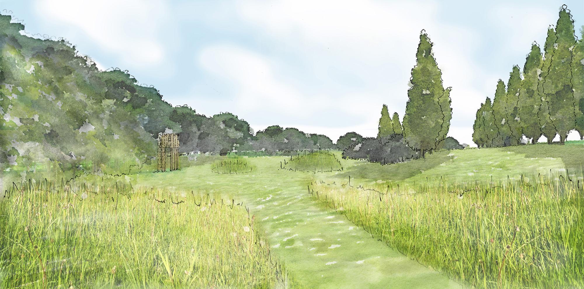 Grass meadow.jpg
