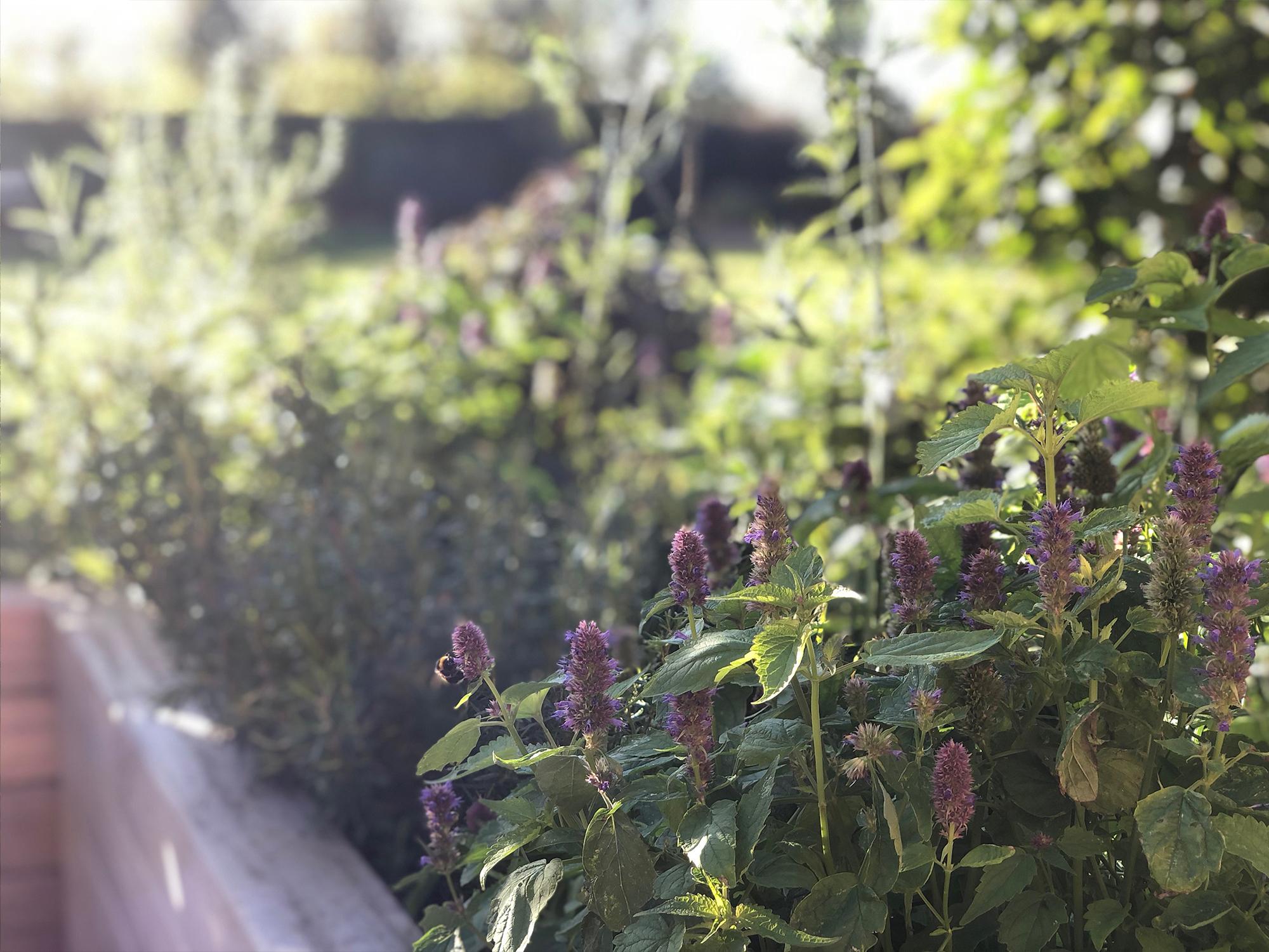 Northamptonshire sun terrace planting 2.jpg