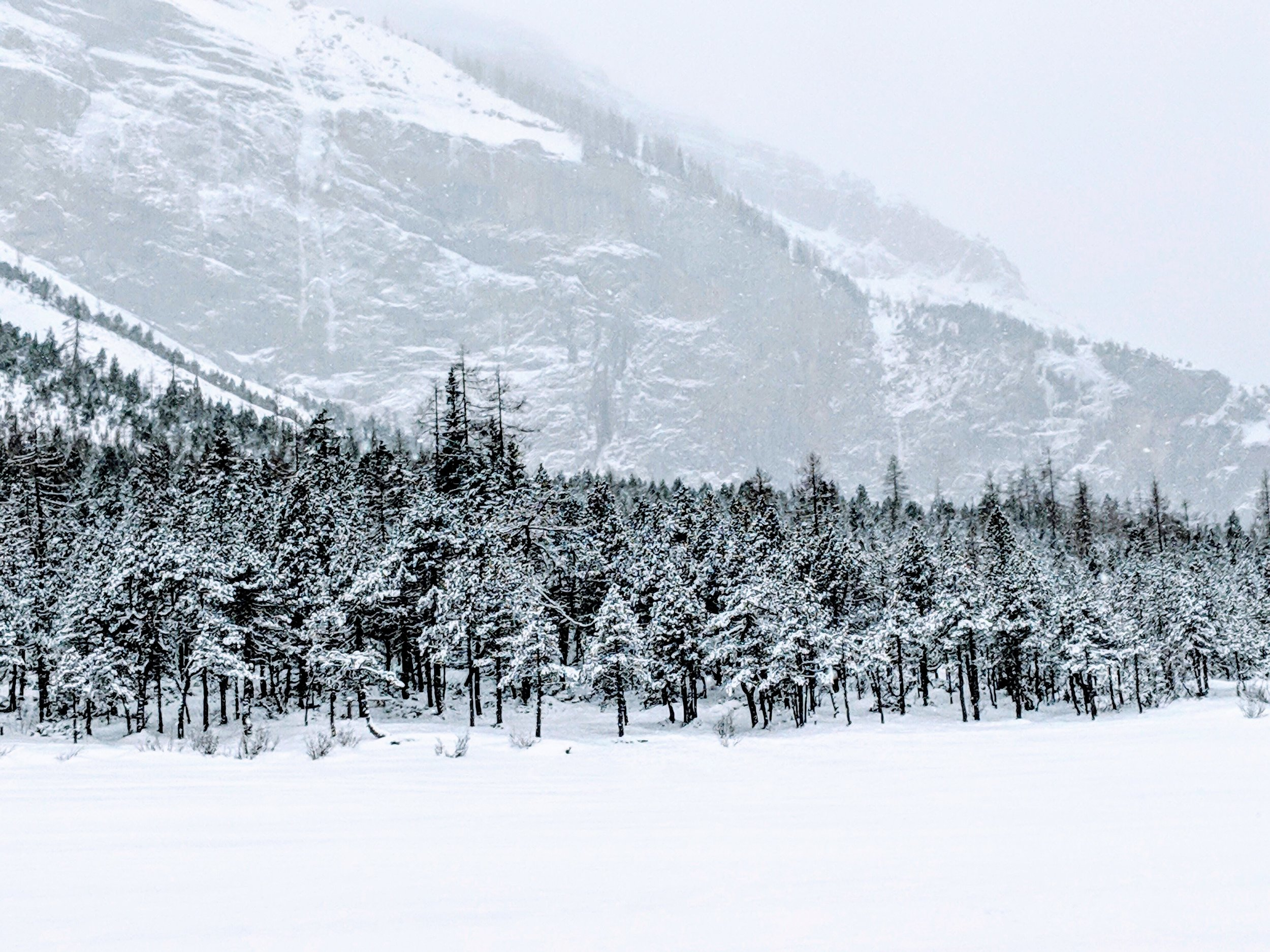 Frozen trees on Oeschinensee.jpg