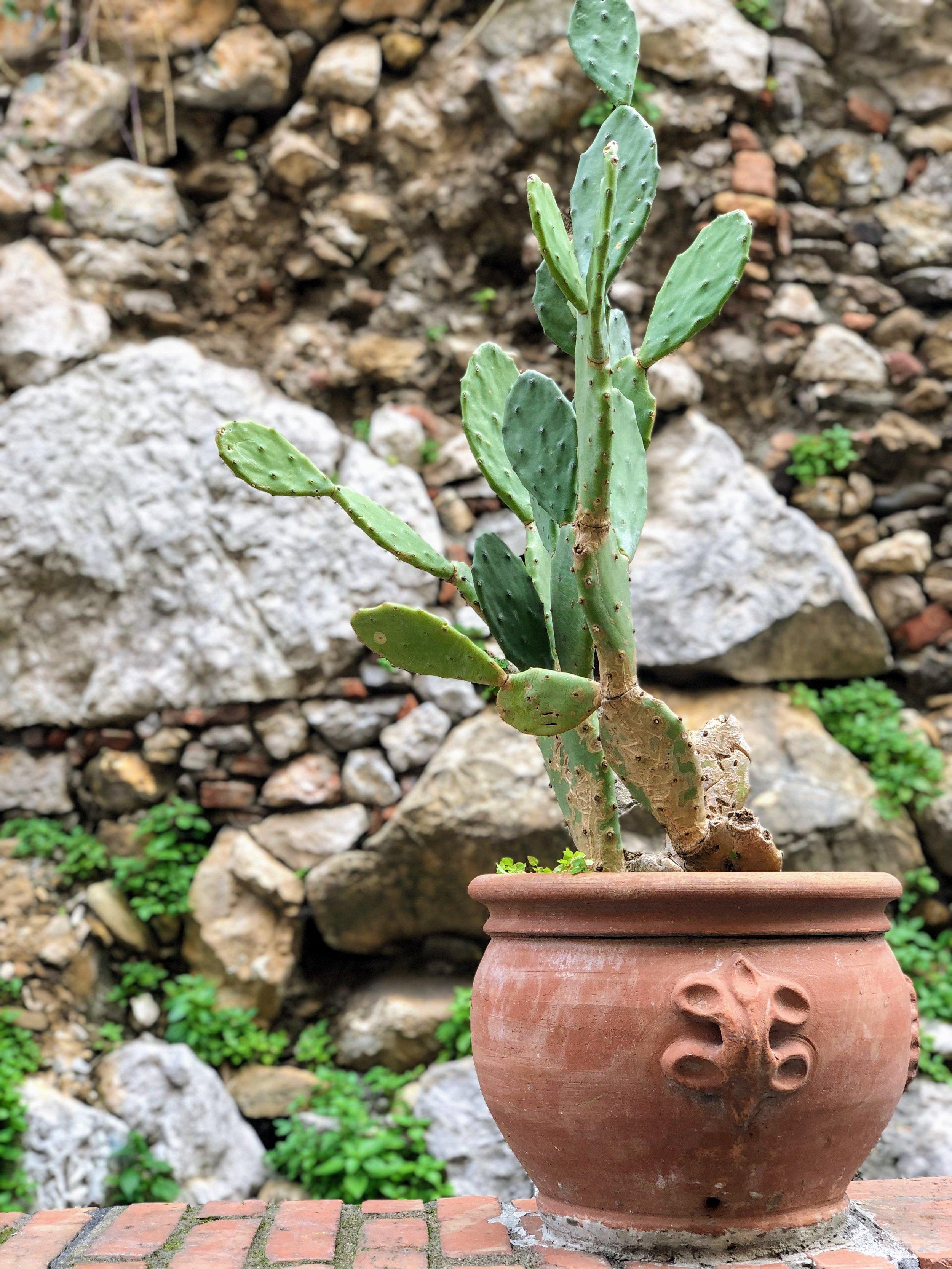 Cacti in Taormina Sicily