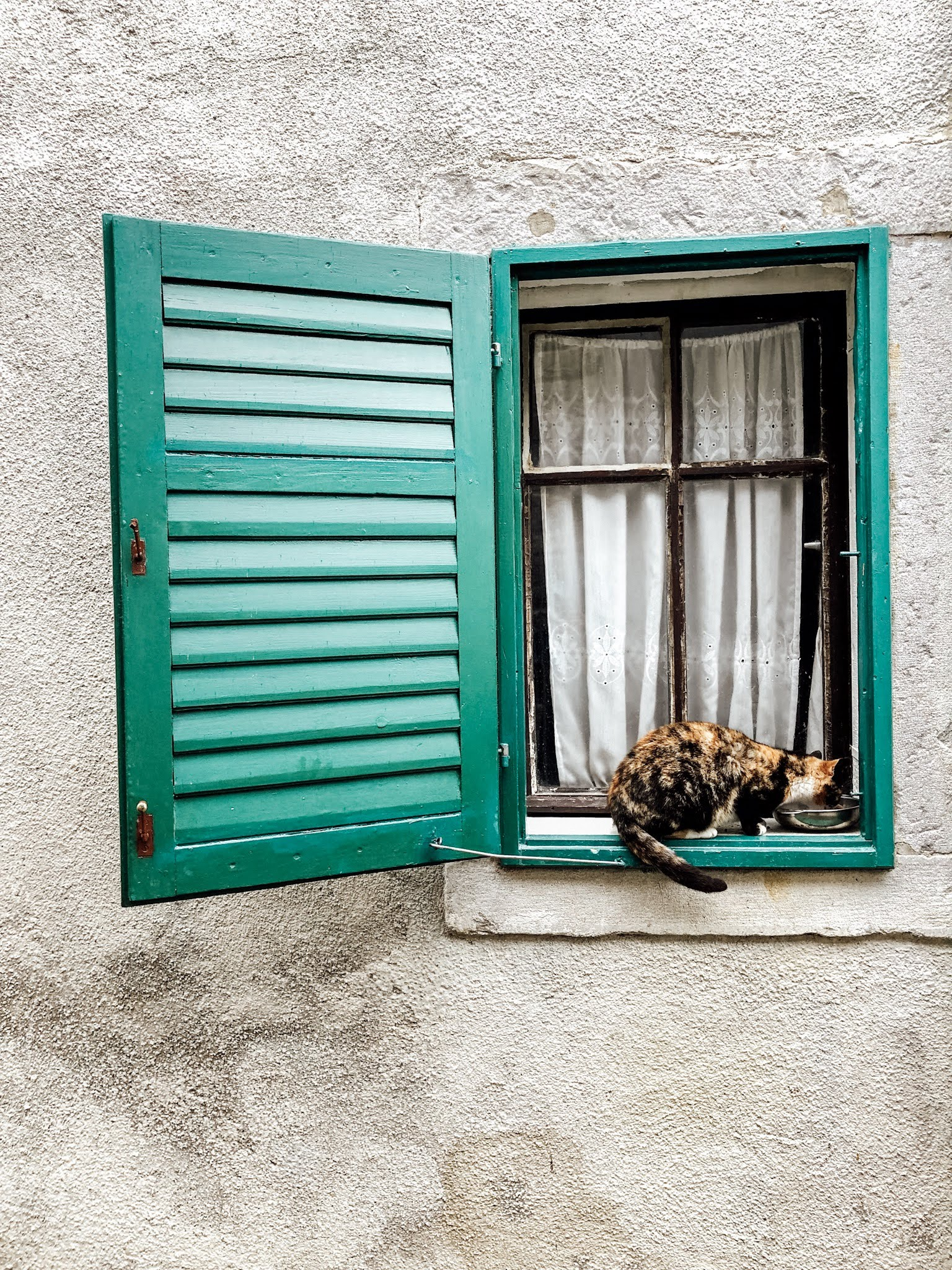 Cat in Hum, Istria, Croatia