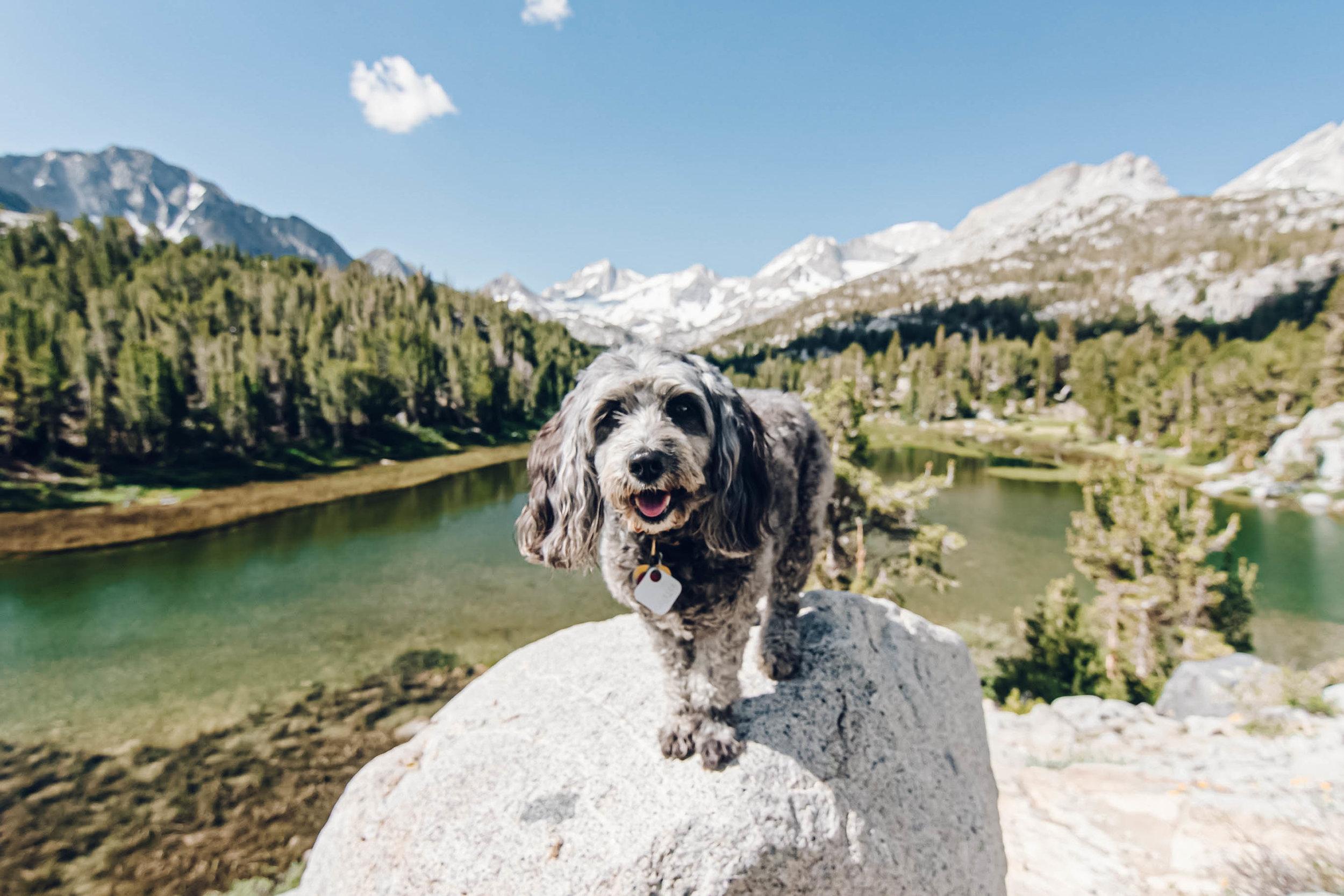 Dog in mountains.jpg