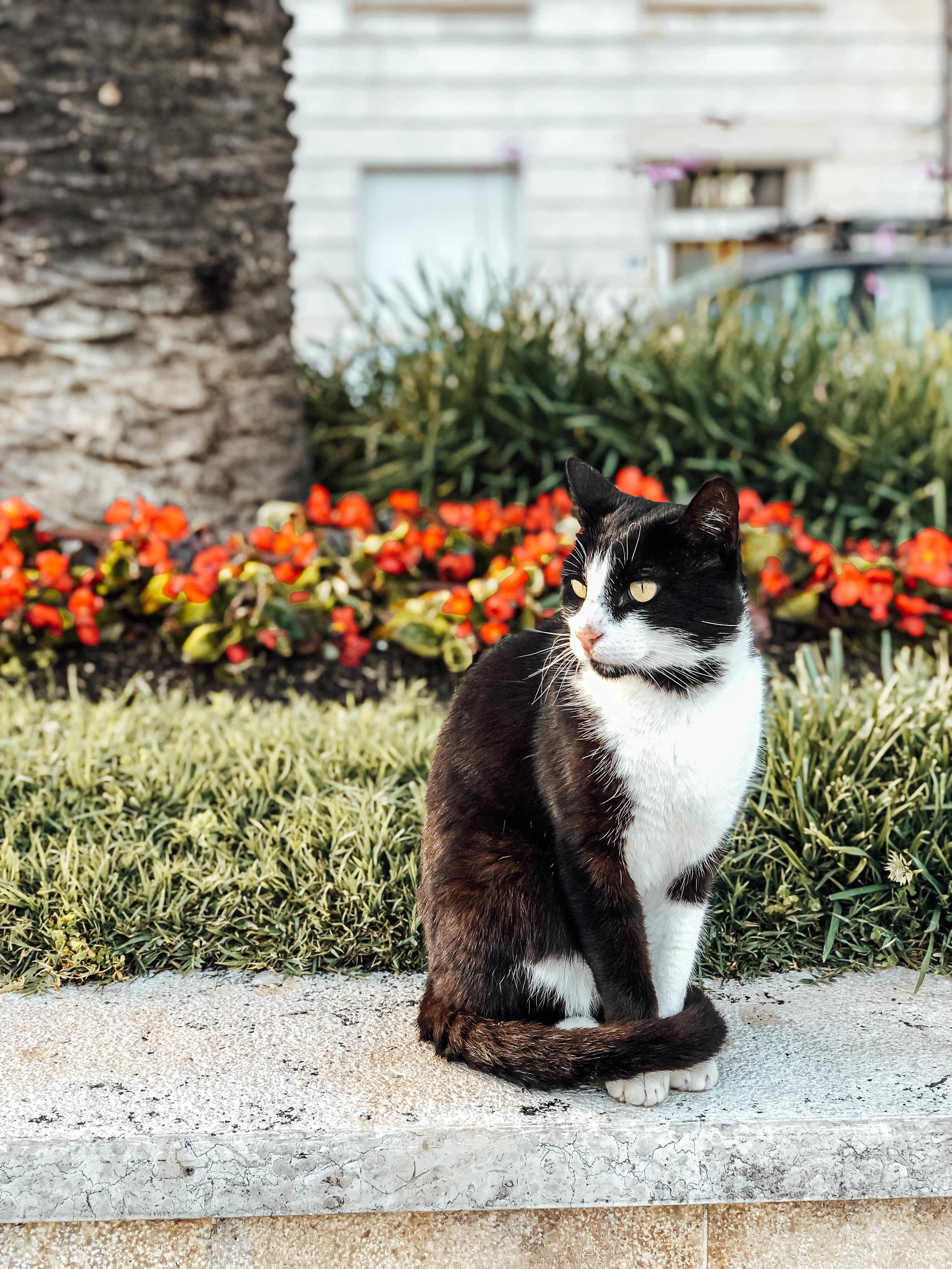 Split cat.jpg