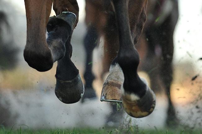 HorseHooves-Galloping.jpg