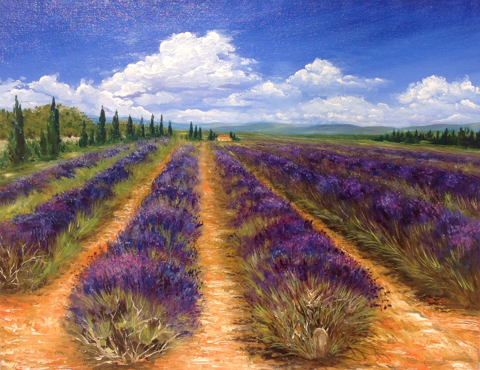 Shirley Stinchcombe - Lavender Fields