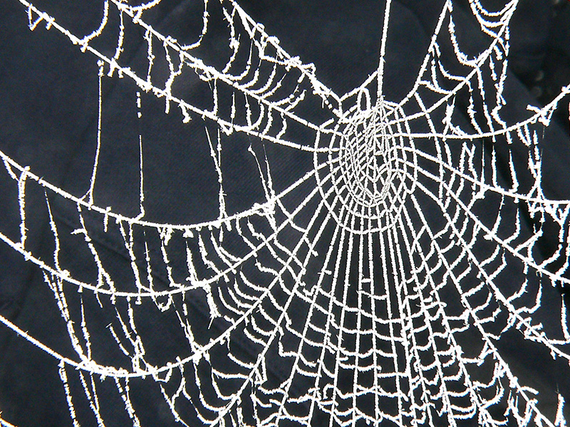 Richard Muir - Frosted Web