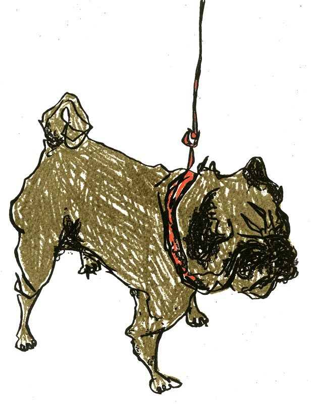 Holly Argyll - Pug