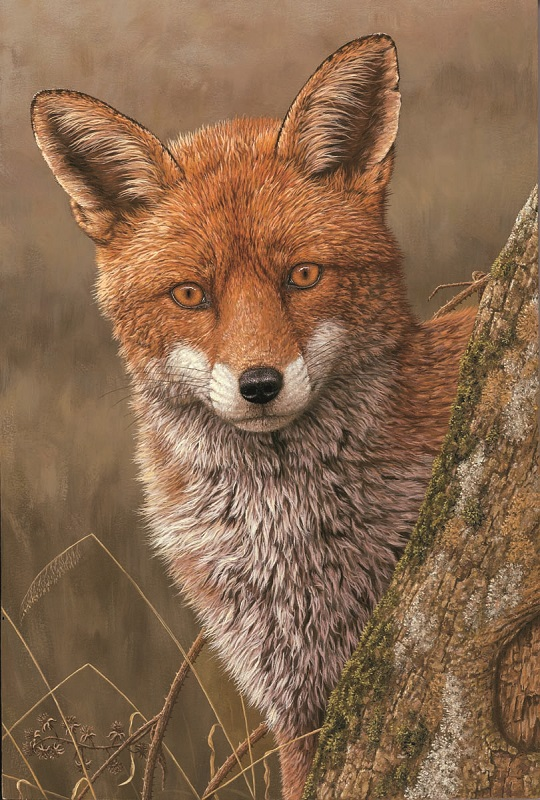 Robert Fuller - Fox at Dawn