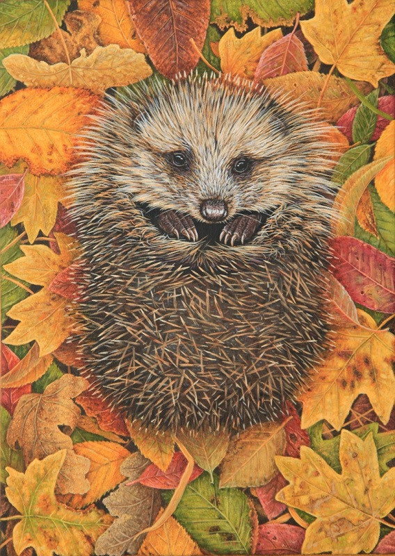 Robert Fuller - Hedgehog in Autumn Leaves