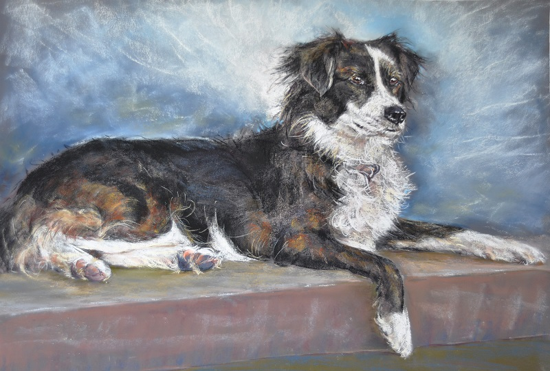 Trish Watson - Border Collie