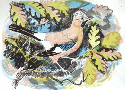 Mark Hearld - Jay