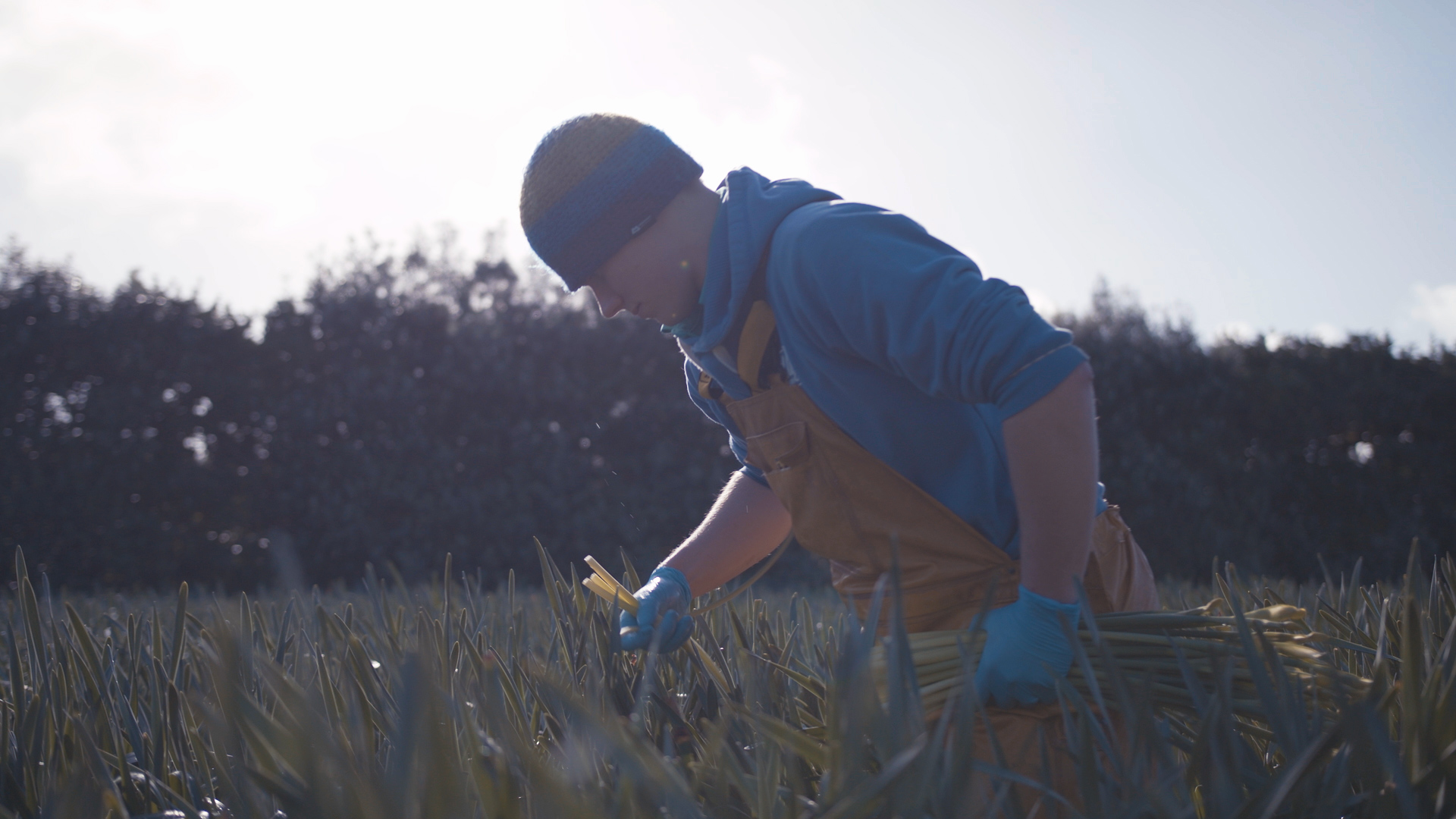 Another grab from the film - picking narcissi in one of the many flower fields